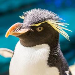Shedd Aquarium – Penguins and Caretakers